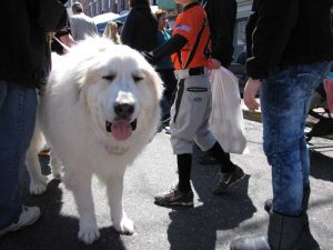 rb-dog-1-041413